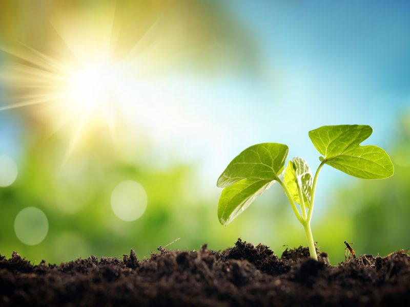 Planning an Effective Growth Strategy